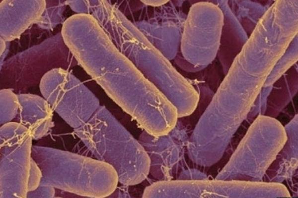 цитология воспаления с реактивными изменениями клеток плоского